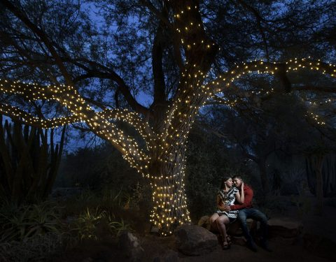 Desert Botanical Garden engagement session